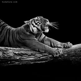 Lukas Holas 静默的动物肖像摄影欣赏