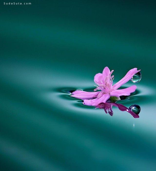 Miki Asai 自然的睫毛 微距摄影欣赏