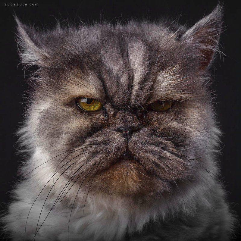 Robert Bahou 动物肖像摄影欣赏