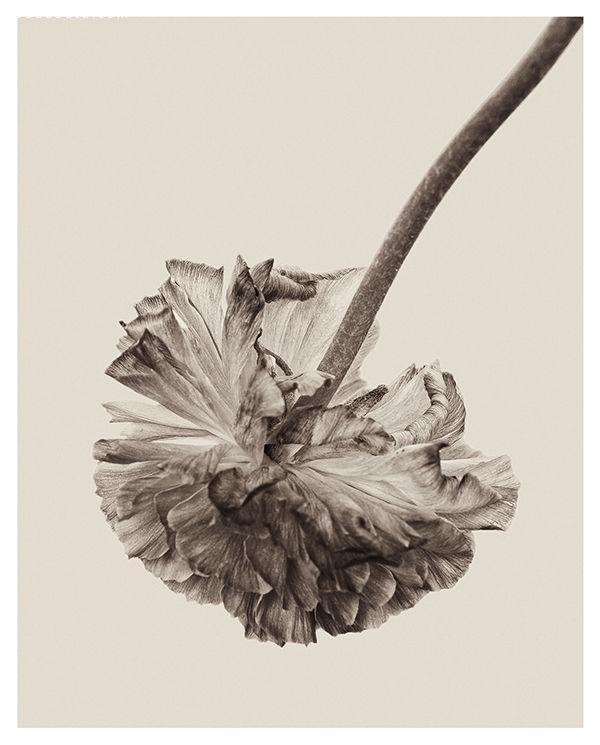 Bettina Güber 花朵们美丽的褶皱
