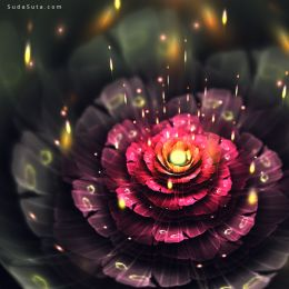 Chiara Biancheri 花朵