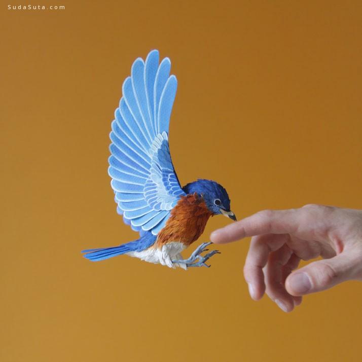 Diana Beltran Herrera 鸟的艺术