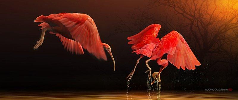 Duong Quoc Dinh 野生动物摄影欣赏
