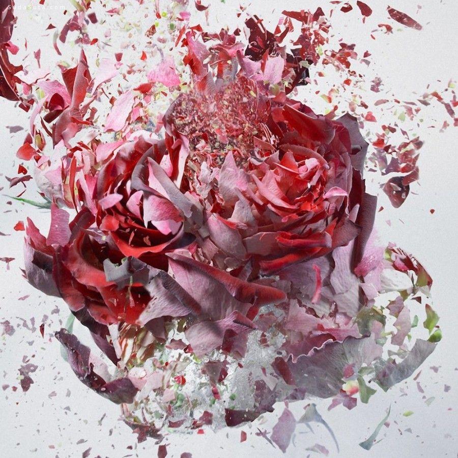 Martin Klimas 爆炸中的花朵 高速摄影欣赏