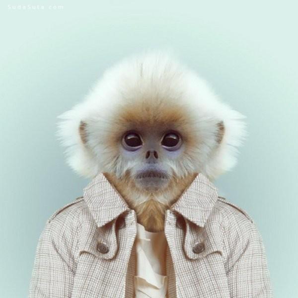 Yago Partal 动物肖像摄影欣赏