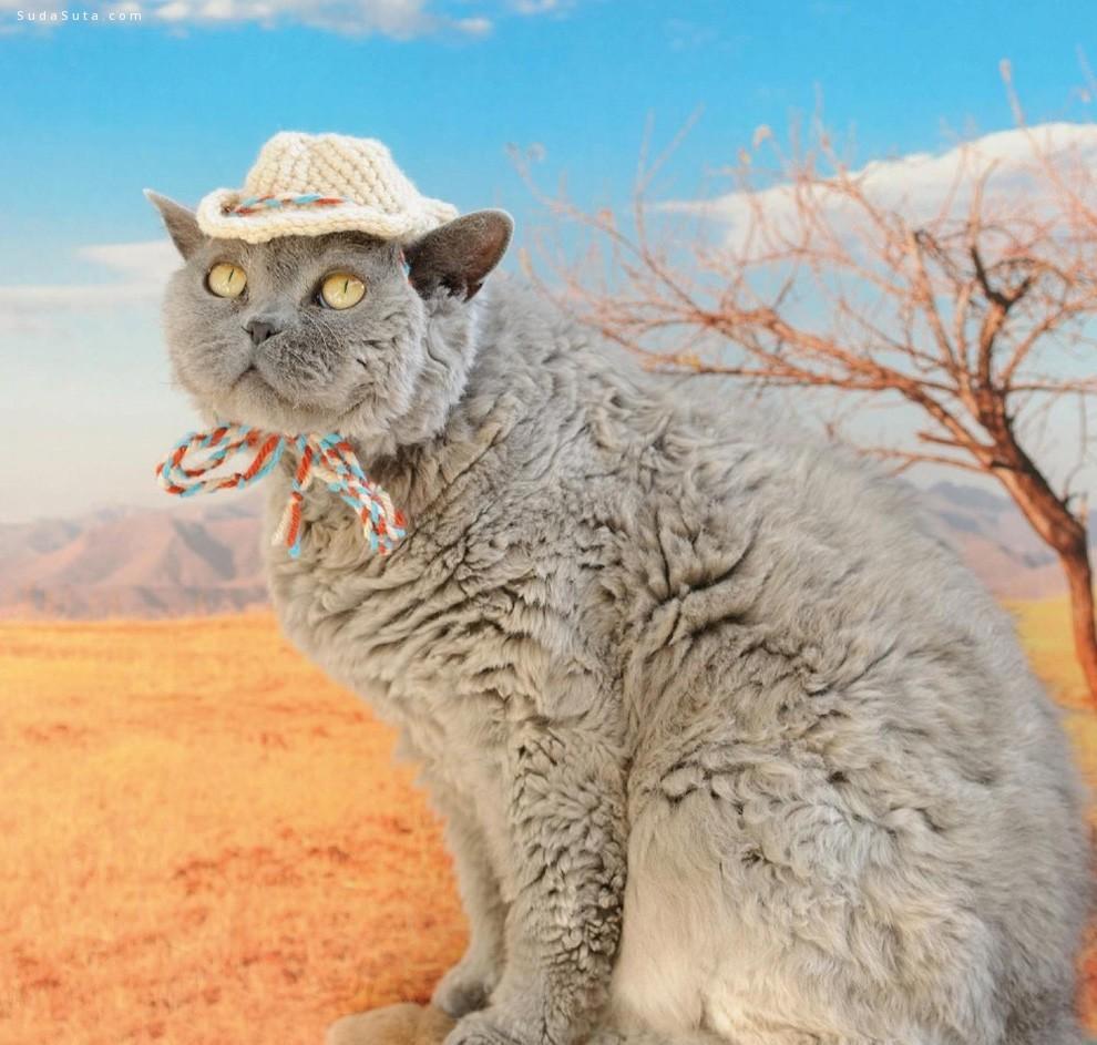 萌猫们戴帽子