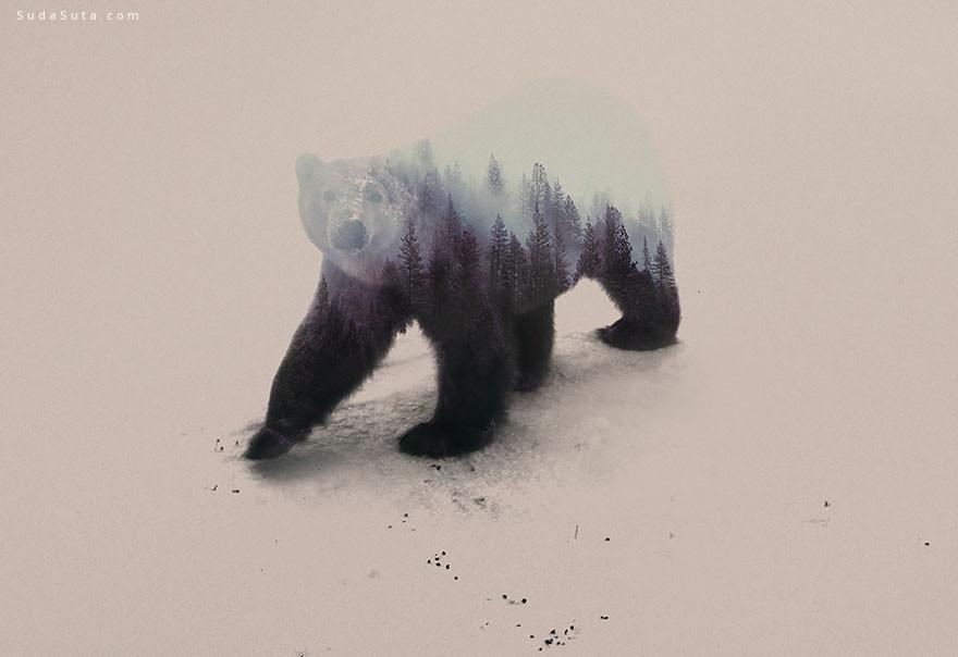 Andreas Lie 双重曝光 动物肖像摄影欣赏