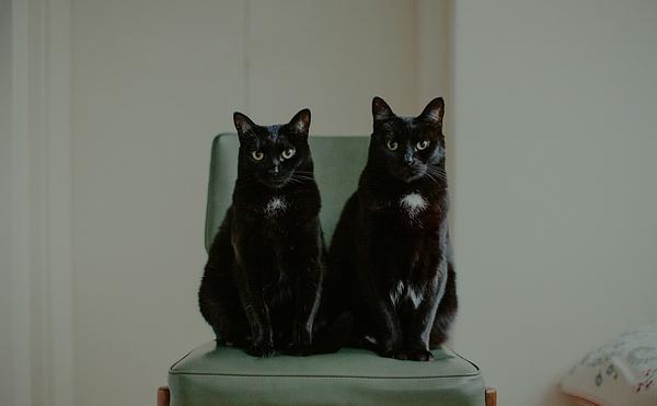 JK Blackwell 黑猫日记