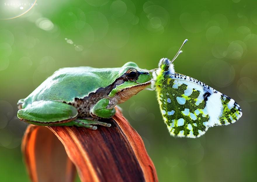蝴蝶与童话 主题摄影欣赏