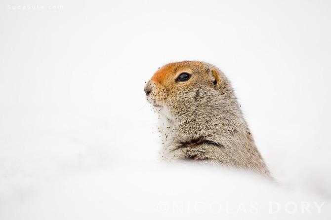 Nicolas Dory 动物肖像摄影欣赏