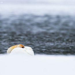 Nicolas Dory 动物自然摄影欣赏