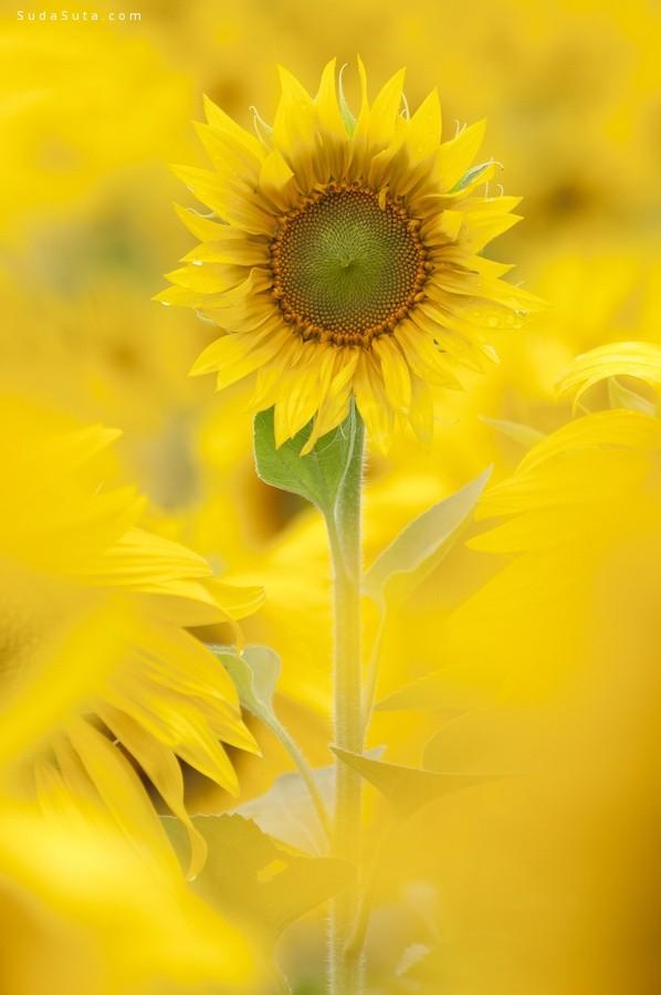 花朵与心情 主题摄影欣赏