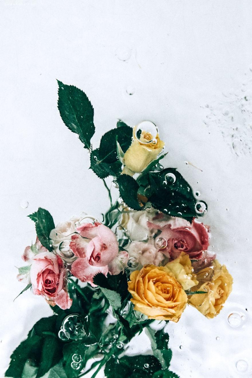 Lisa Sorgini 水中漂浮的花朵