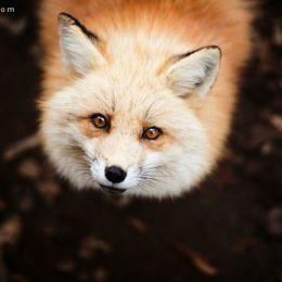 Lauren Bath 唯美的自然摄影欣赏