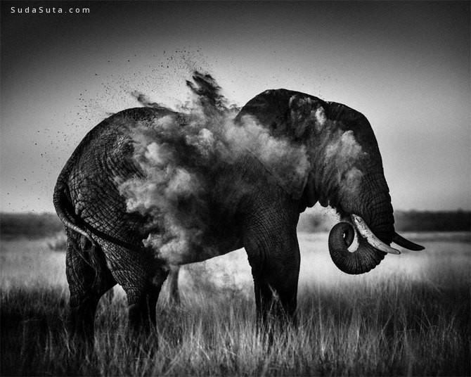 Laurent Baheux 黑白动物肖像摄影欣赏
