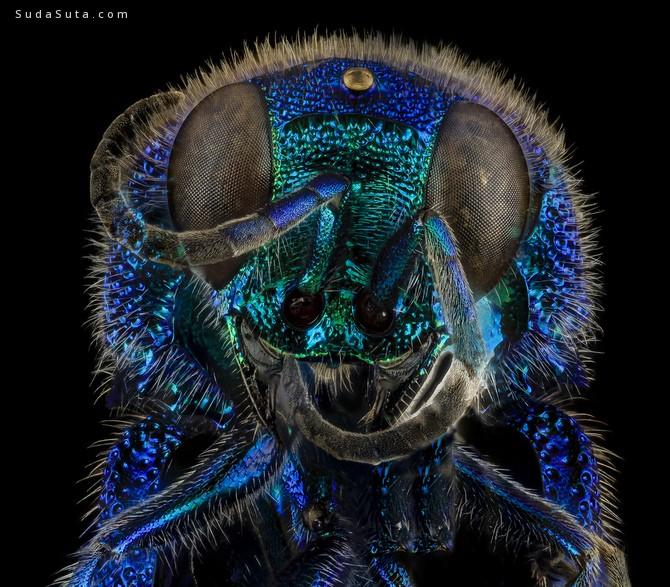 Sam Droege 昆虫摄影欣赏