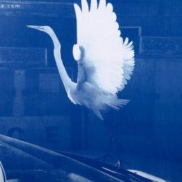Tim Barber 摄影作品欣赏《Blues》