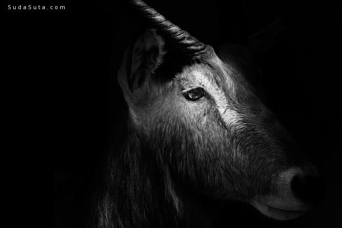 Troy Moth 动物肖像摄影欣赏