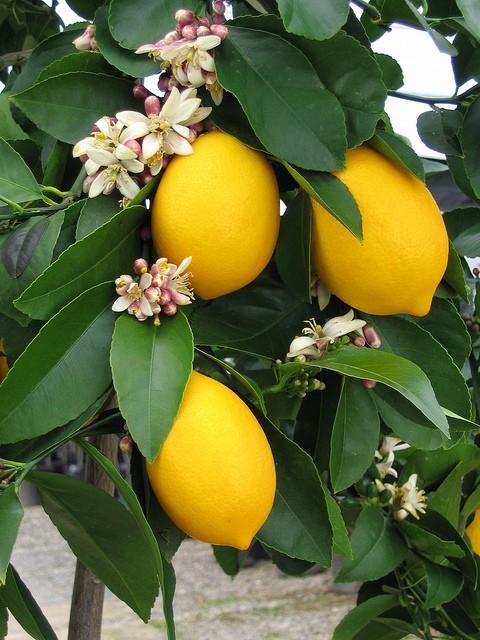 夏天与柠檬 主题摄影欣赏