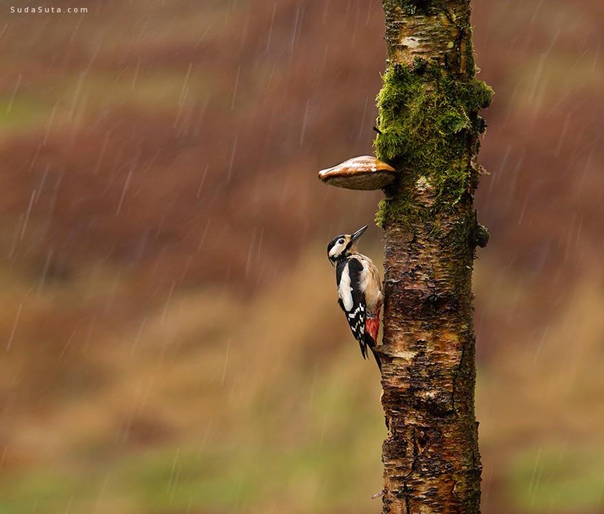 雨季雨季 唯美浪漫的自然摄影欣赏