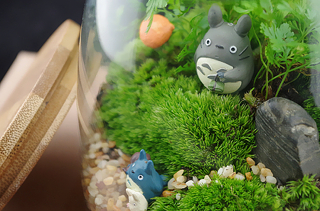 多肉君以及苔藓君 可爱的静物绿植摄影欣赏