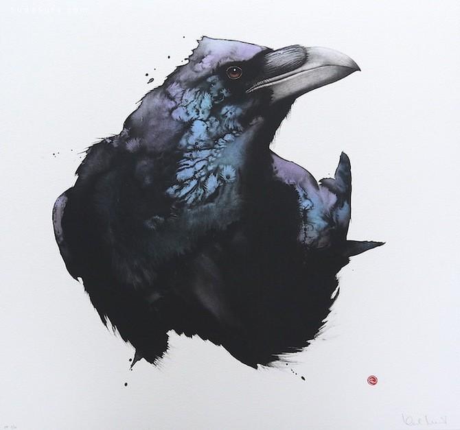 Artist Karl Martens 鸟类插画欣赏