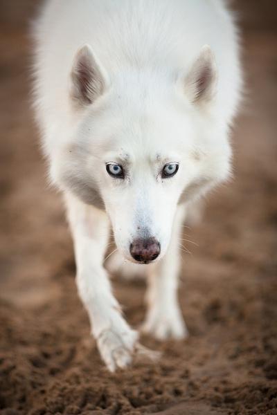 Brian Buckler 狗狗很友爱 宠物摄影欣赏