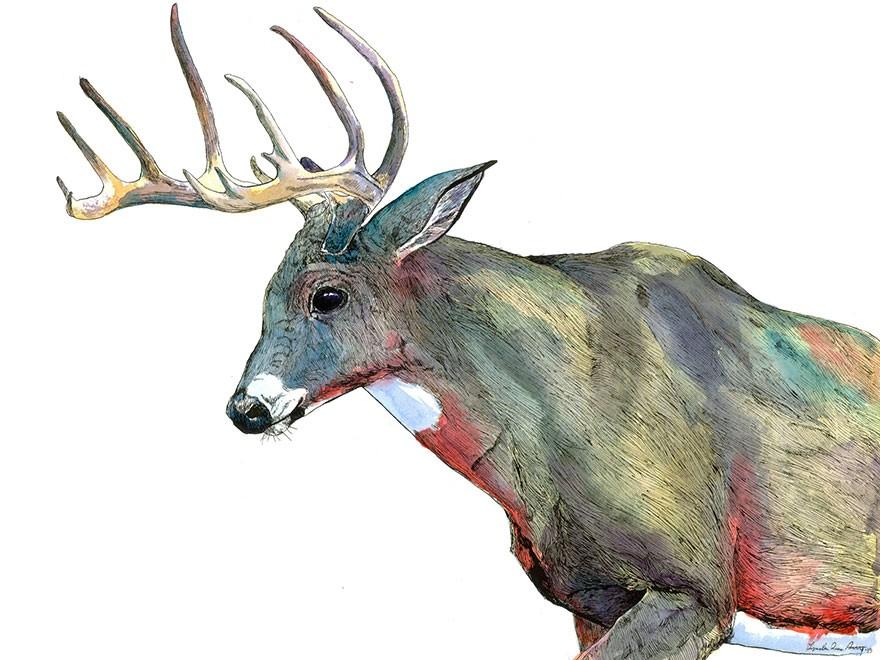 Janie Stapleton 手绘动物插画欣赏