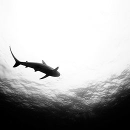Jorge Cervera Hauser 水下摄影欣赏