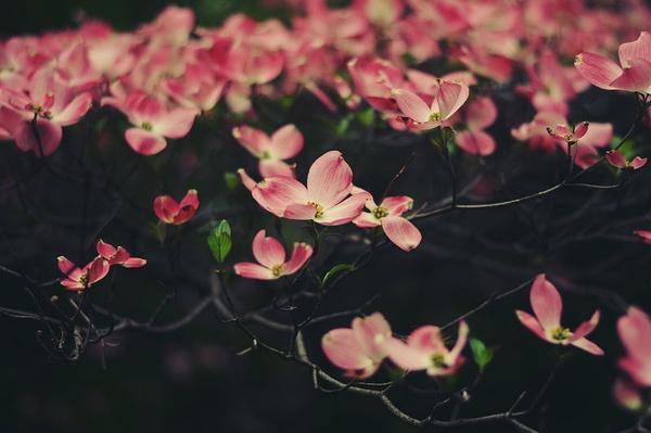 Kendell 温馨浪漫的生活摄影