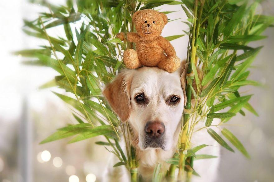 Gabi Stickler 宠物摄影欣赏