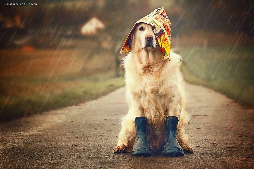 Mali 谢谢你的陪伴 宠物摄影欣赏