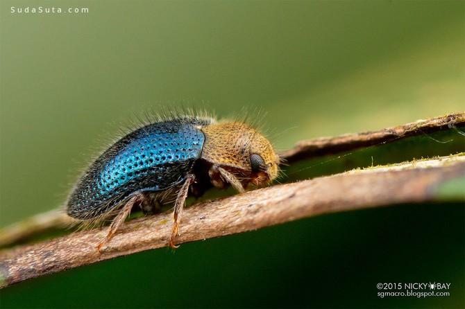 Nicky Bay 昆虫摄影欣赏