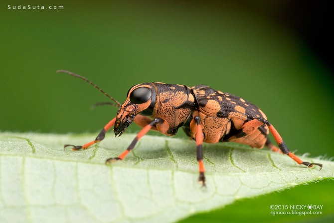 Nicky Bay 充满色彩的昆虫摄影欣赏