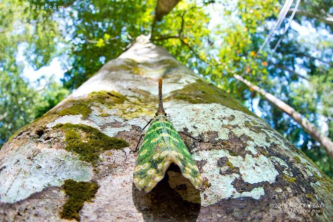 Nicky Bay 地面上的的色彩 昆虫摄影欣赏