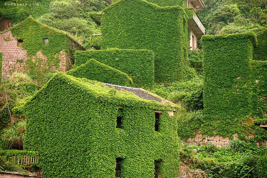 枸杞岛 满眼绿色 旅行日记分享