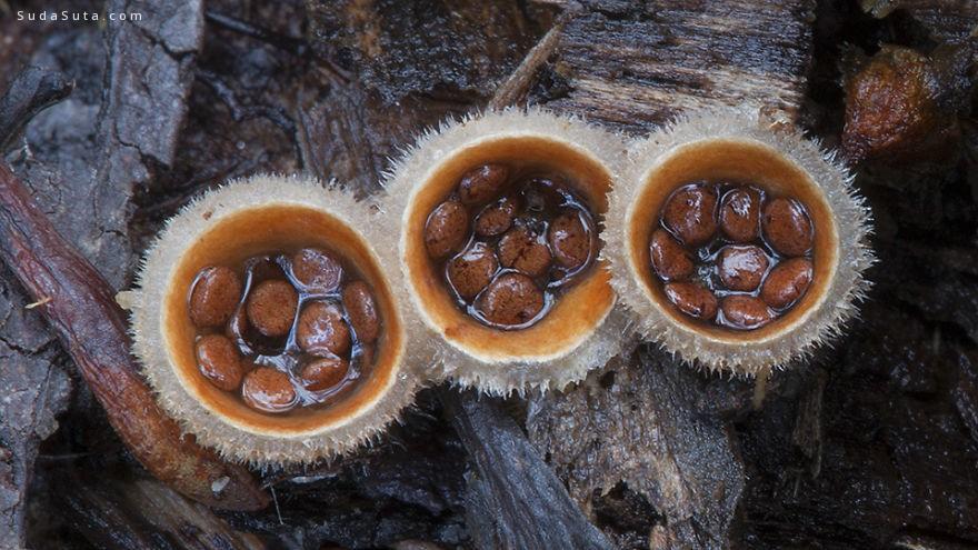 Steve Axford 早安,蘑菇君