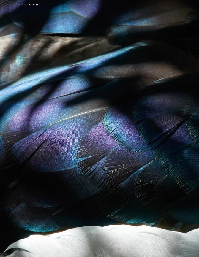 Thomas Lohr 羽毛的色彩 鸟类摄影欣赏