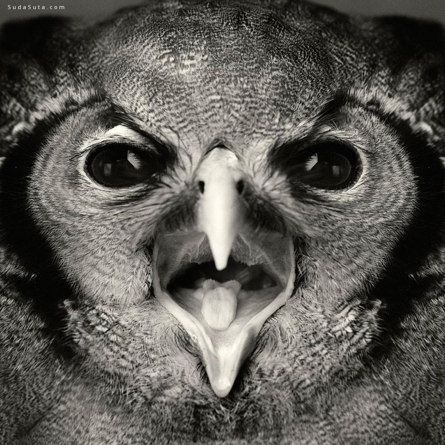 Vincent Lagrange 动物肖像摄影欣赏