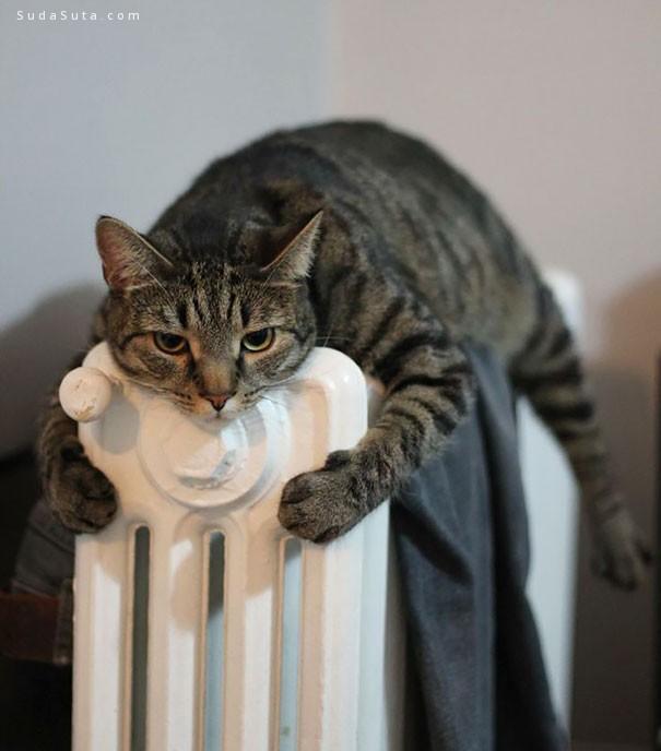 爱与温暖 宠物摄影欣赏