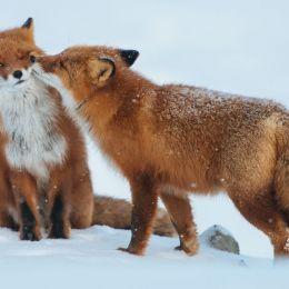 我爱你就是要抱在一起 动物摄影欣赏