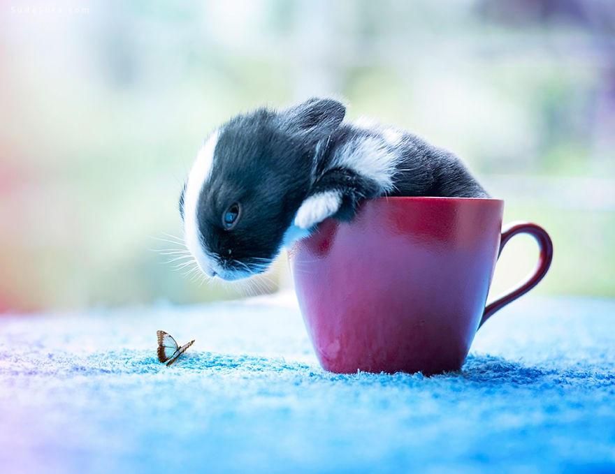 arefin03 我的可爱的兔子 宠物摄影欣赏