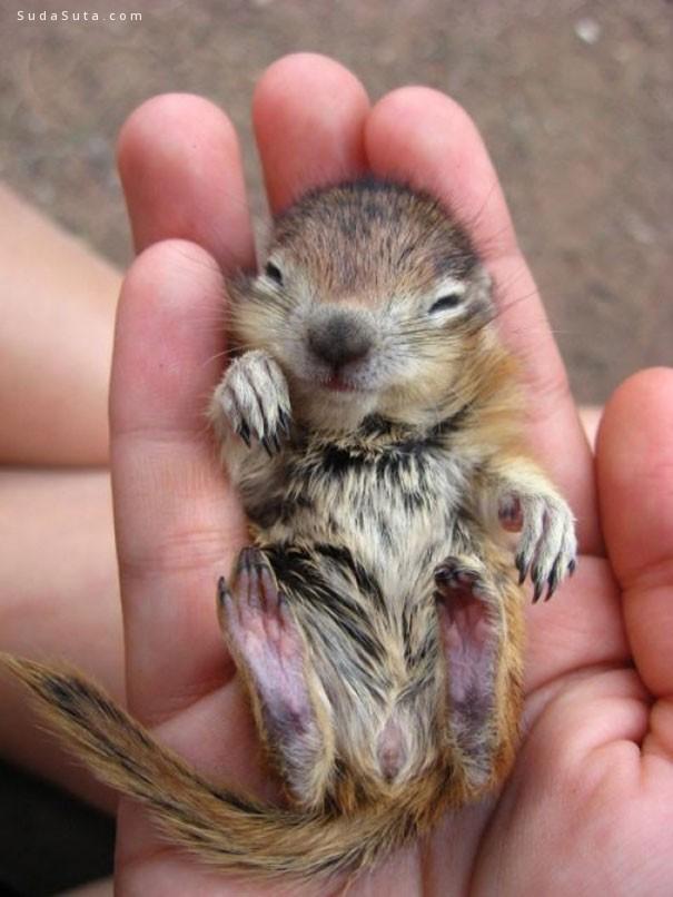 可爱的手掌中的动物