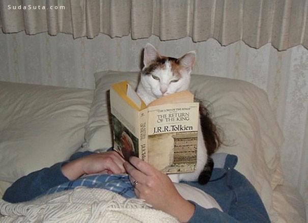 别读书了陪我玩吧!喵星人来袭!
