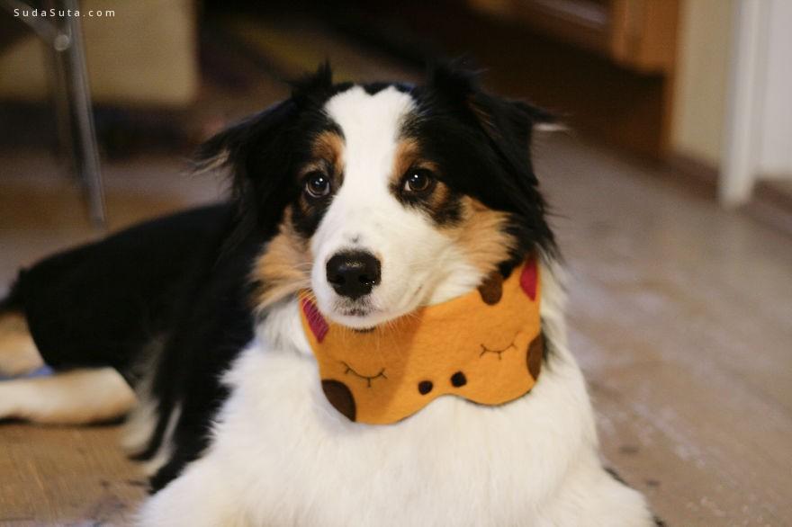 Ööloom store 可爱幽默的动物眼罩