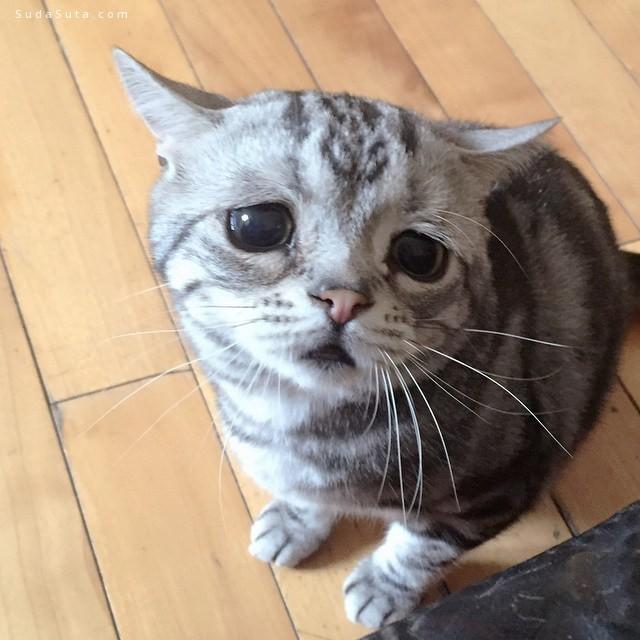 猫咪很悲伤 宠物摄影欣赏
