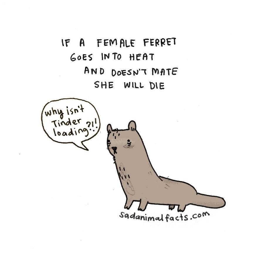 Brooke Barker 那些悲惨的动物的故事门