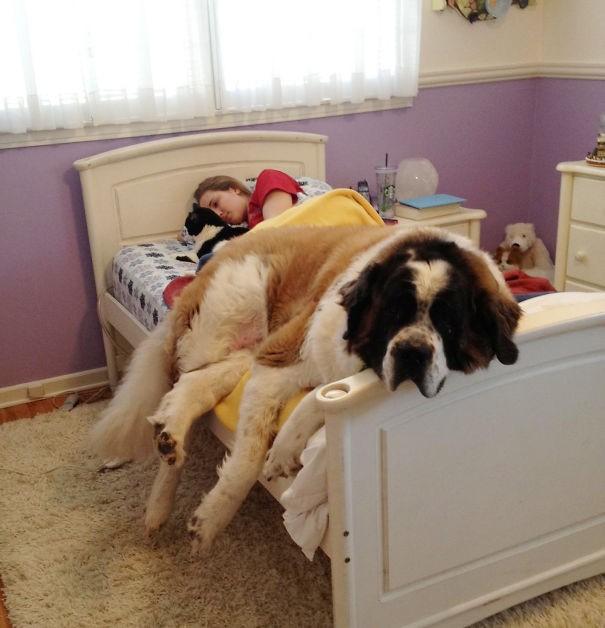 汪星人占据了你的卧室