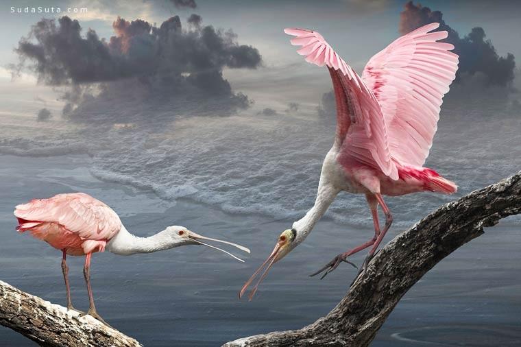 Cheryl Medow 鸟类艺术摄影欣赏