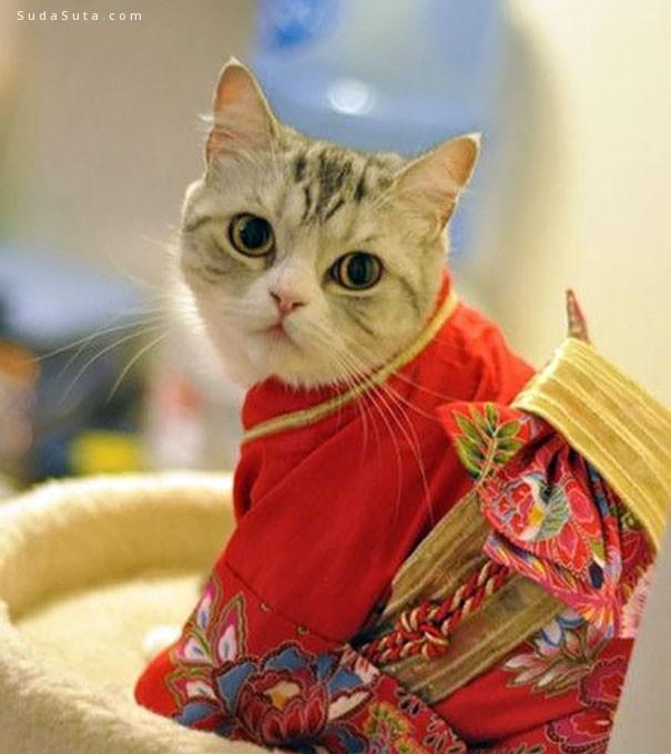 日本和服喵 可爱的猫咪摄影
